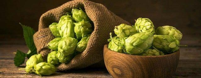 Lúpulo, ingrediente sagrado de la cerveza artesanal.